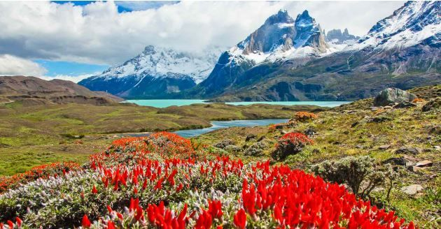 Best of Chilean Patagonia: From Torres del Paine to Cape Horn